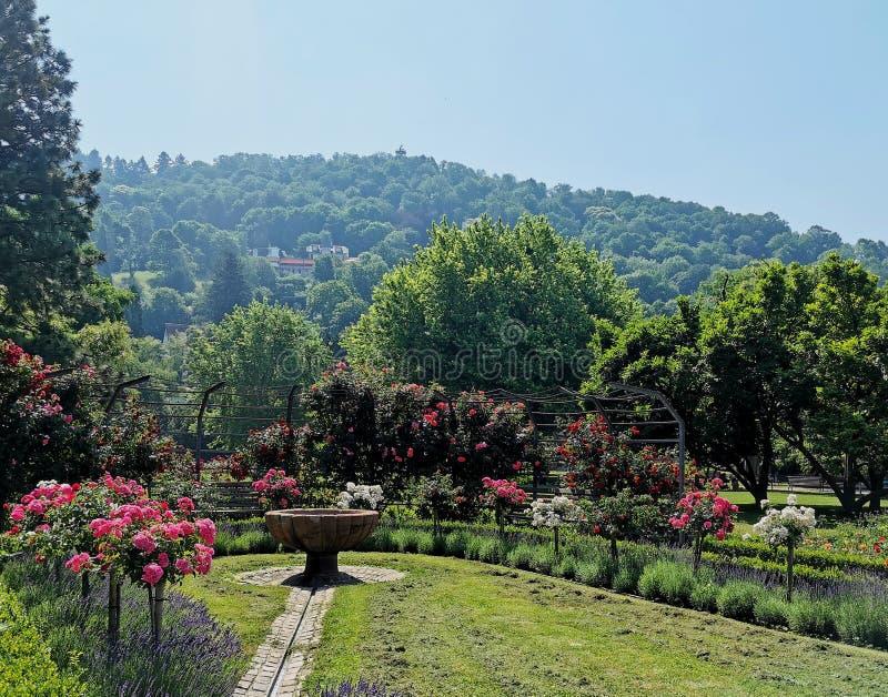Allmänhet parkerar och den rosa trädgården royaltyfria foton