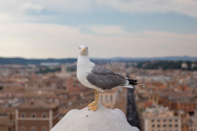 Allocation des places méditerranéenne de mouette sur le toit de Vittoriano à Rome, Italie image stock
