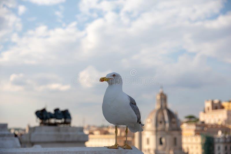 Allocation des places m?diterran?enne de mouette sur le toit de Vittoriano photo libre de droits