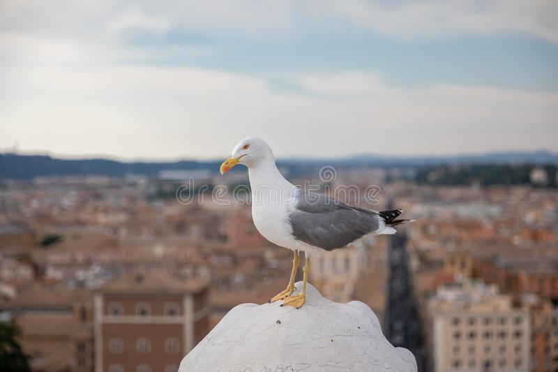 Allocation des places m?diterran?enne de mouette sur le toit de Vittoriano ? Rome, Italie image libre de droits