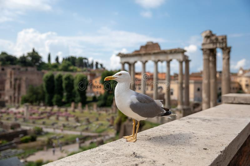 Allocation des places m?diterran?enne de mouette sur des pierres du forum romain ? Rome, Italie image libre de droits