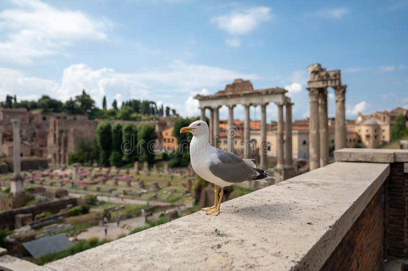 Allocation des places m?diterran?enne de mouette sur des pierres du forum romain ? Rome, Italie photos libres de droits