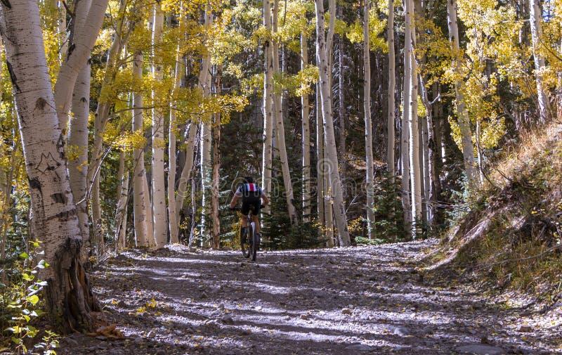 Alloggiamento Di Montagna Sul Circuito Del Bacino Interno Del Flagstaff, AZ immagini stock