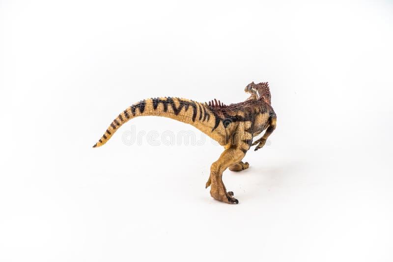 Allosaurus, δεινόσαυρος στο άσπρο υπόβαθρο στοκ εικόνες
