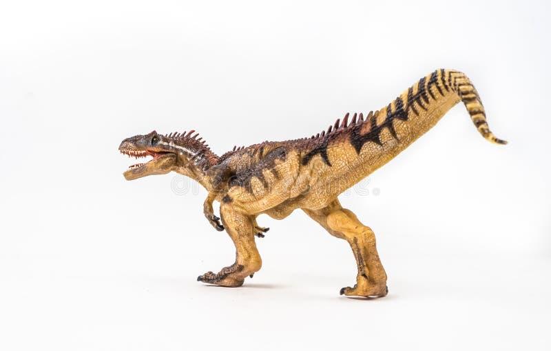 Allosaurus, δεινόσαυρος στο άσπρο υπόβαθρο στοκ εικόνα με δικαίωμα ελεύθερης χρήσης