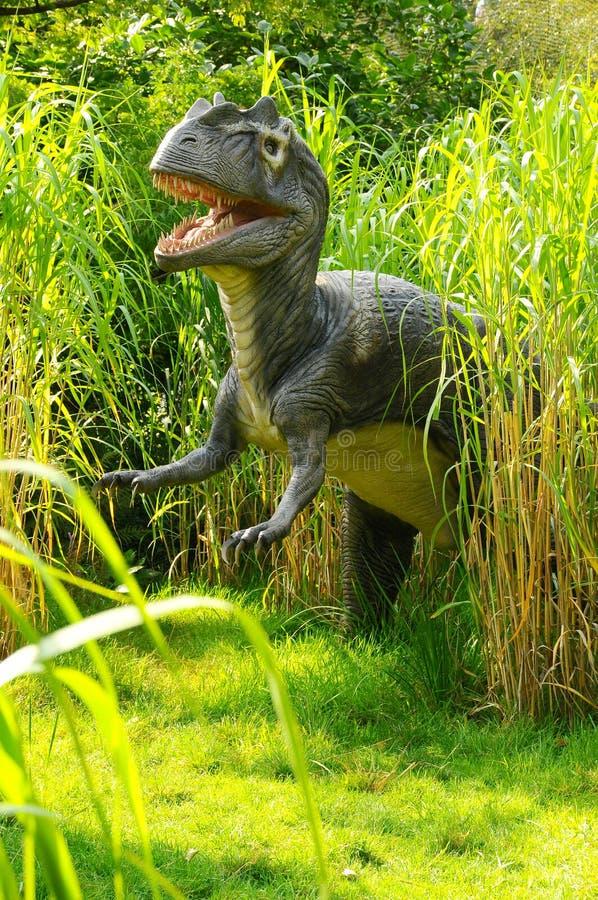 Allosaurus de attaque photos stock