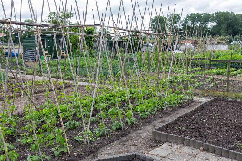 Allotment garden in spring with runner bean canes. Allotment garden in early spring with runner bean canes royalty free stock photography