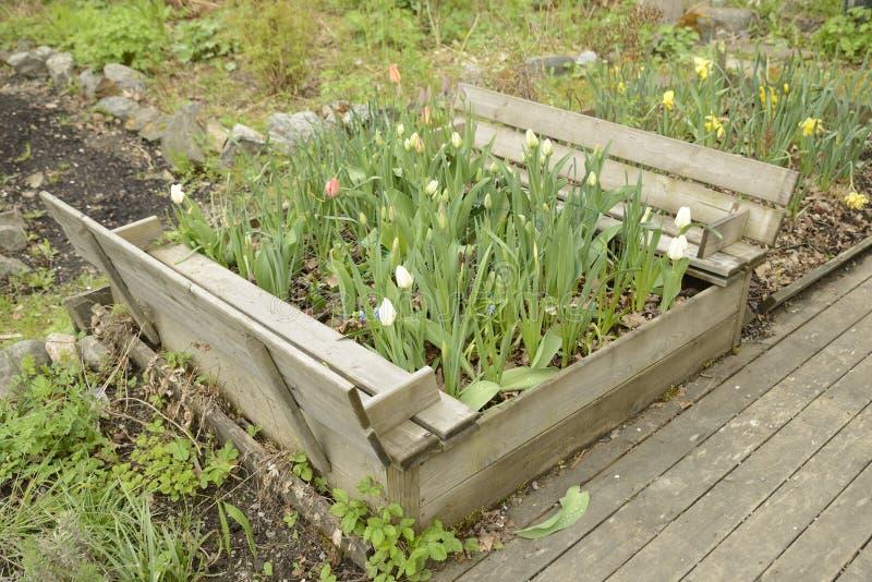 Allotment garden in summer. Allotment gardens at a garden in Stockholm area stock photo