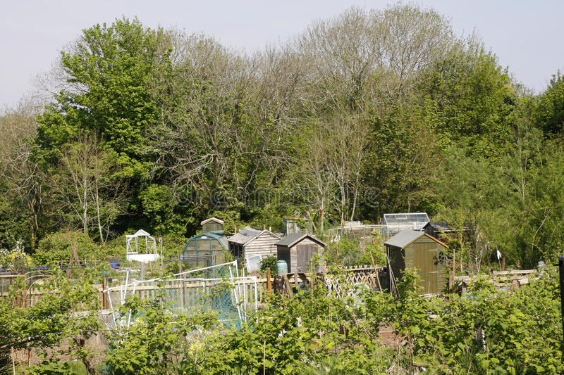 Download Allotment in Spring stock photo. Image of spring, sown - 19278890