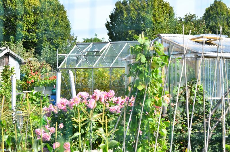 Allotments where trees fruit and vegetables are grown. Allotments are used to grow fruits vegetables and various varieties of flowers rhubarb is well known in my royalty free stock images