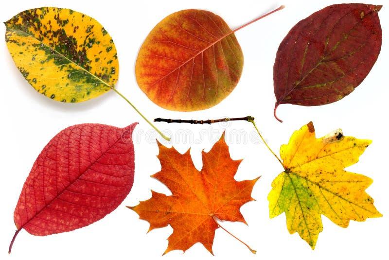 Allsorts das folhas de outono em um fundo branco 1. imagens de stock