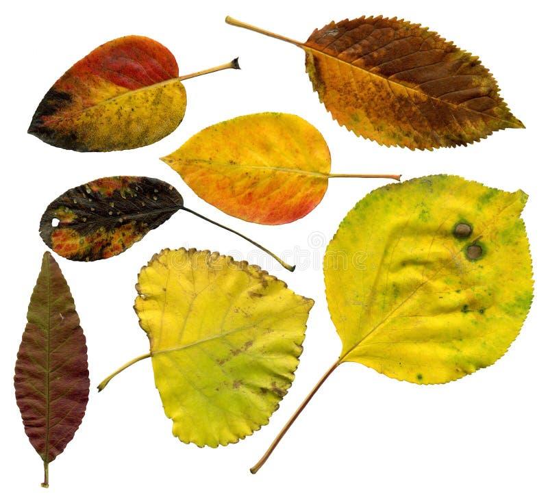 Allsorts der Herbstblätter lizenzfreies stockfoto