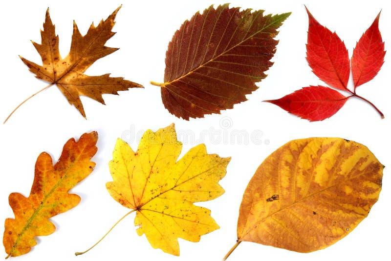 Allsorts des lames d'automne sur un fond blanc 2 image stock
