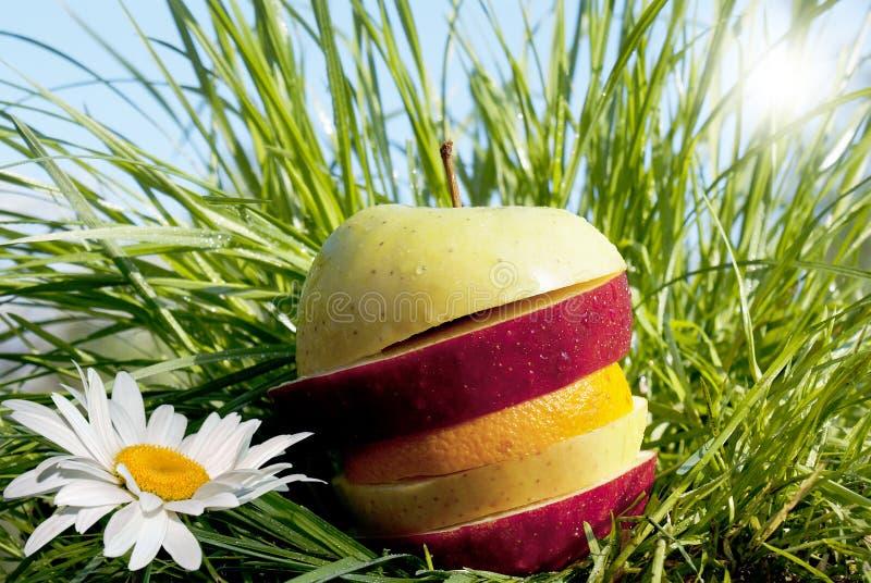 allsorts frukt arkivbild