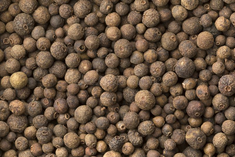 Allspice, dried unripe fruit, full frame. Close up stock photography