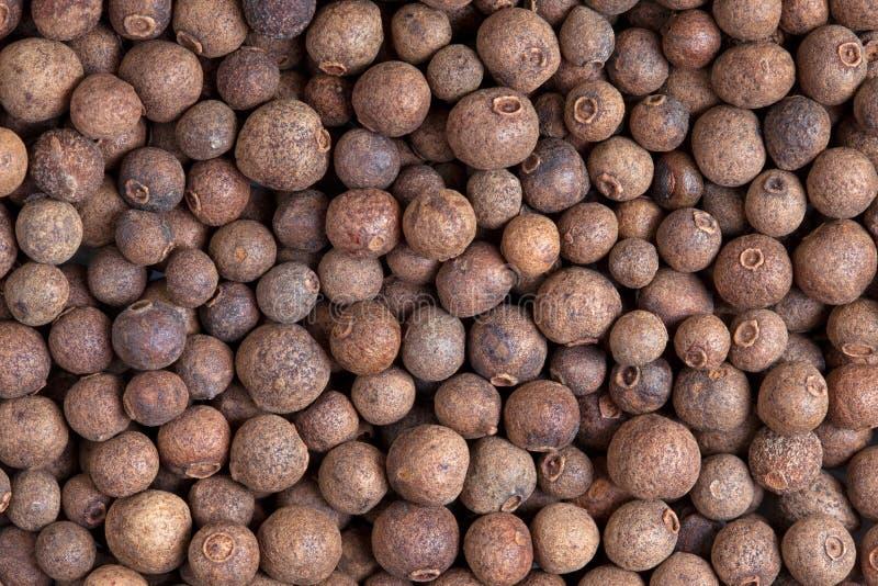 Allspice (jamaica pepper) stock photo
