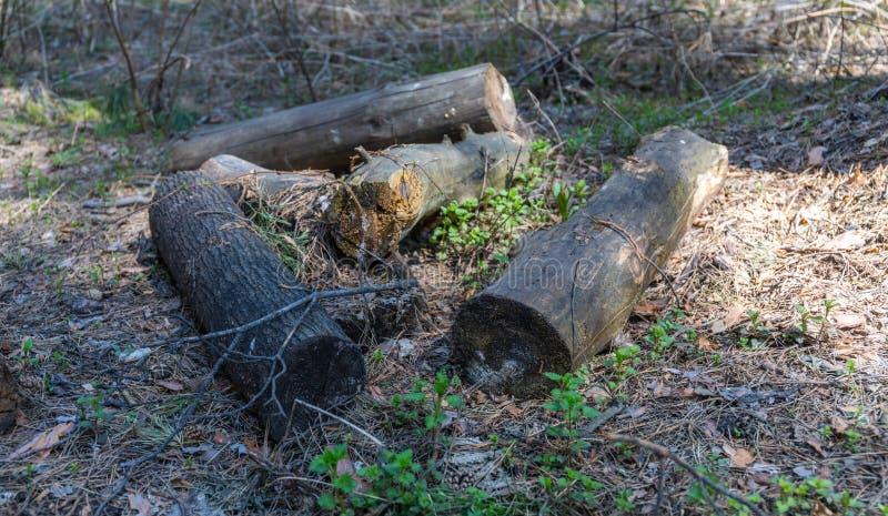 Allt i världen har ett slut, och något stycke av trä blir endera ett vedträ eller ruttet royaltyfri fotografi