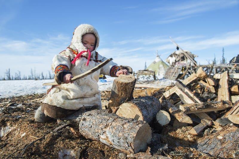 Alltagsleben von russischen eingeborenen Renhirten in der Arktis stockbilder
