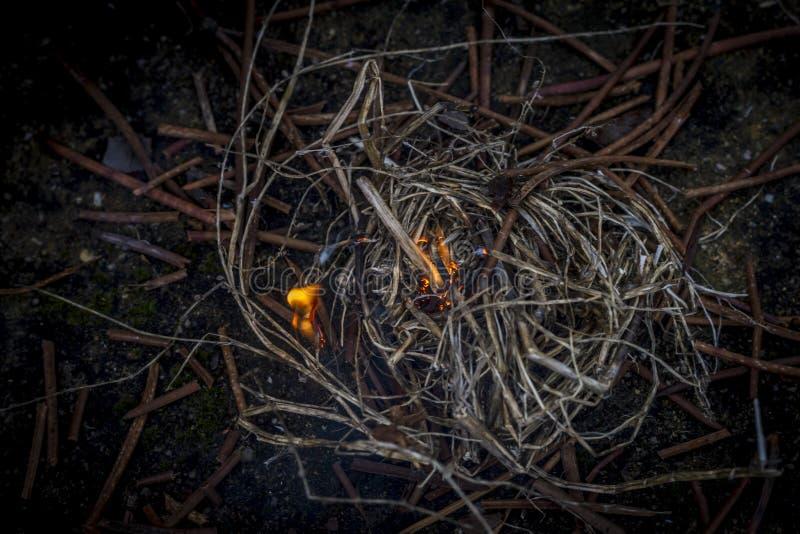Allumage d'un feu photographie stock libre de droits