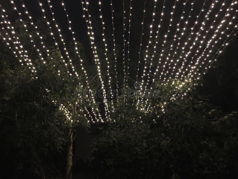 Allumage la nuit au-dessus des arbres photographie stock