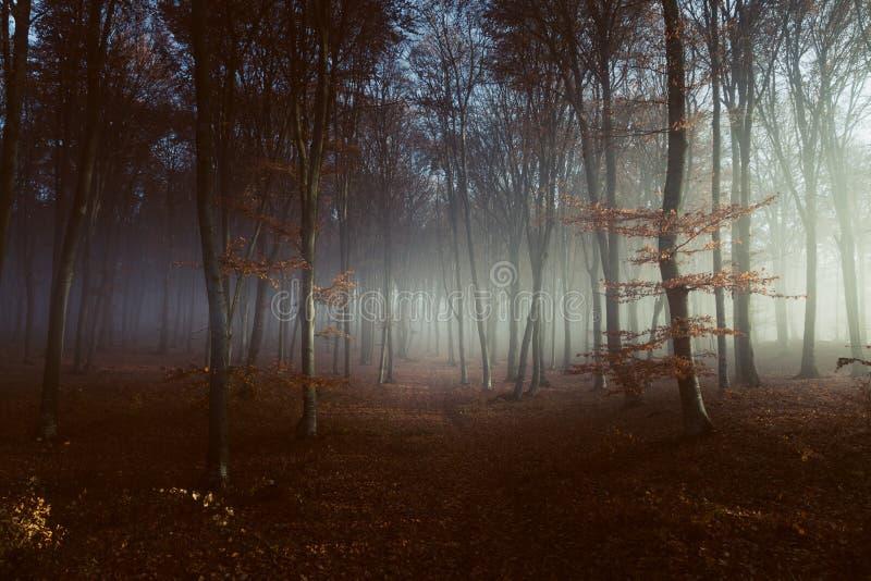 Allumez dans la forêt brumeuse photo libre de droits