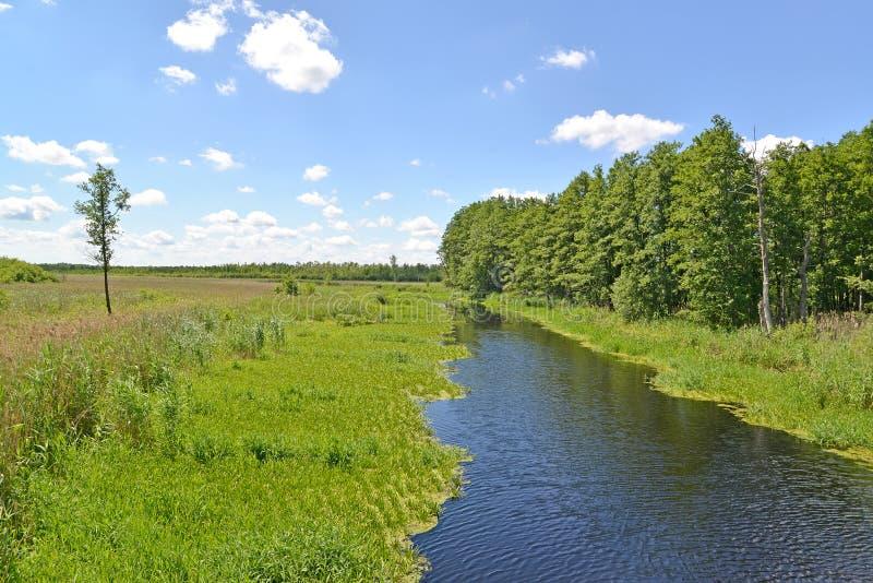 Alluviaal gebied van de rivierweide in de zomer zonnige dag Het gebied van Kaliningrad stock foto