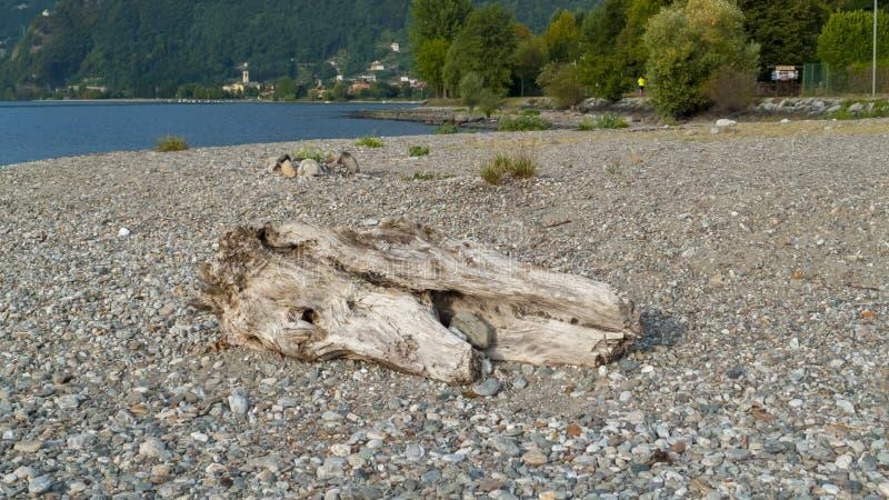 Alluviaal, wrakstukken en jetsam, ging de boomstam, hout met gaten over door op het strand Gravedona, Meer Como stock foto's