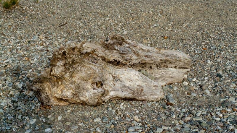 Alluviaal, wrakstukken en jetsam, ging de boomstam, hout met gaten over door op het strand Gravedona, Meer Como royalty-vrije stock foto's