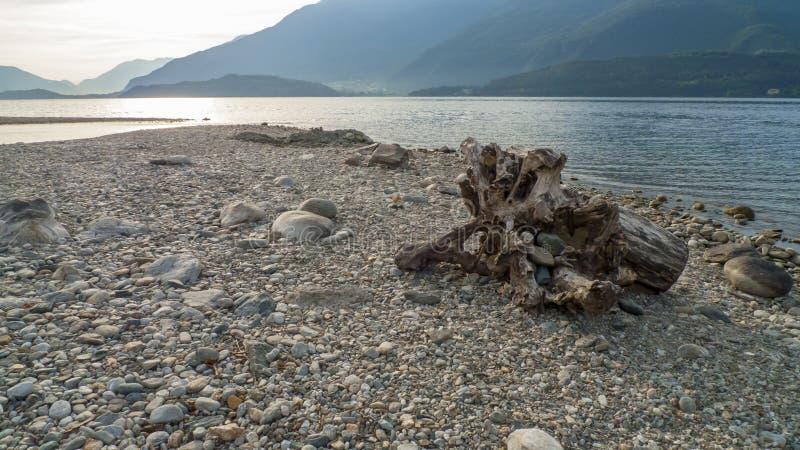Alluviaal, wrakstukken en jetsam, ging de boomstam, hout met gaten over door op het strand Gravedona, Meer Como royalty-vrije stock foto