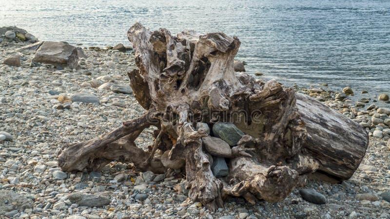Alluviaal, wrakstukken en jetsam, ging de boomstam, hout met gaten over door op het strand Gravedona, Meer Como royalty-vrije stock afbeelding