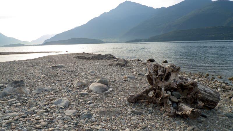 Alluviaal, wrakstukken en jetsam, ging de boomstam, hout met gaten over door op het strand Gravedona, Meer Como royalty-vrije stock fotografie