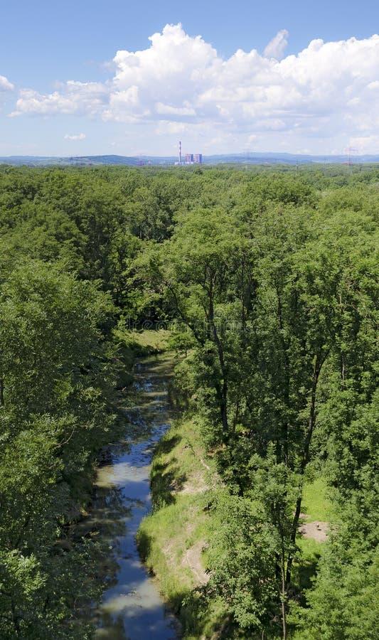Alluvialer Wald mit Wasserlauf stockfotografie