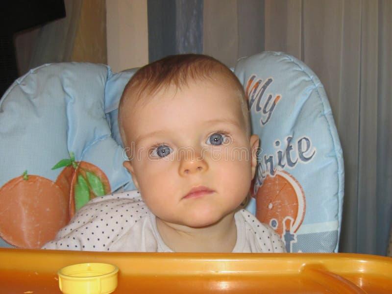 Allvarlig blick av pysens stora ögon royaltyfria foton
