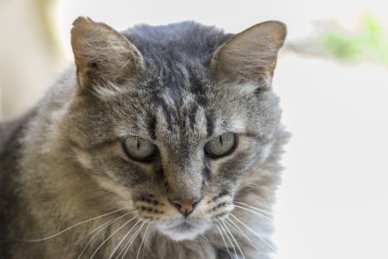 Allvarlig katt i trädgården arkivbild