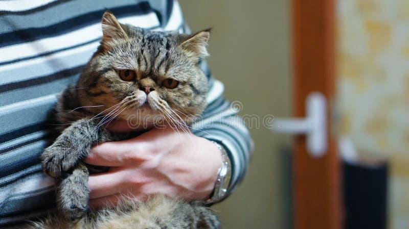 Allvarlig katt på händerna av män royaltyfria bilder