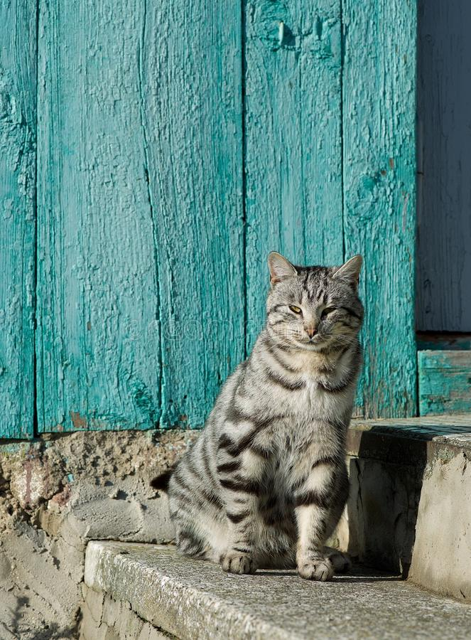 Allvarlig katt, stolt katt som kopplar av på en sol Tamdjursammanträde på solnedgångtimmar i gården tätt övre för katt arkivbilder