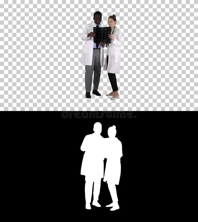 Allvarlig trevlig kvinnadoktor och afro amerikansk stråle för doktorsstudiehjärna x, Alpha Channel royaltyfri bild