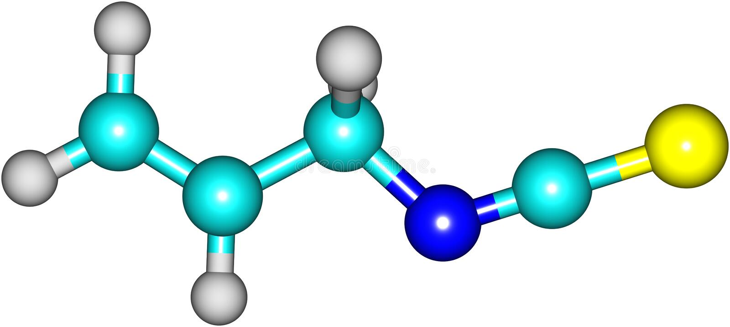 Allyl isothiocyanate model - wasabi vector illustration
