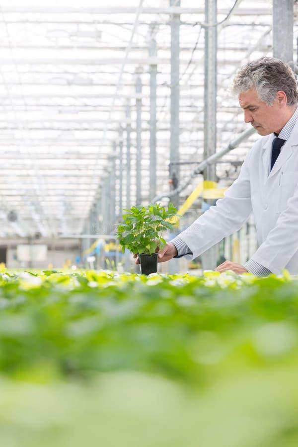 Almácigo masculino de la tenencia del bioquímico en cuarto de niños de la planta imagen de archivo libre de regalías
