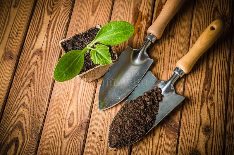 Almácigos calabacín y utensilios de jardinería fotos de archivo