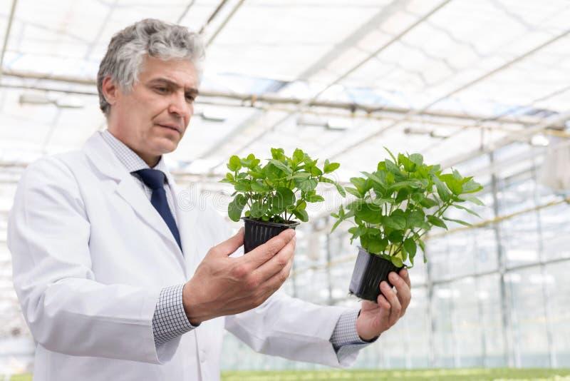 Almácigos de examen del bioquímico de sexo masculino maduro en cuarto de niños de la planta imagen de archivo libre de regalías