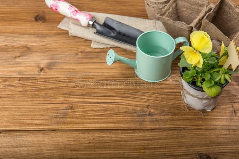 Almácigos de una flor para plantar en un pote en una tabla de madera blanca con los utensilios de jardinería El concepto de culti imagenes de archivo