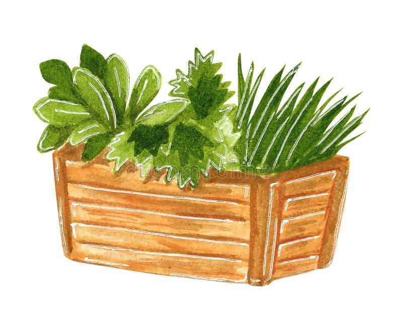Almácigos en la caja de madera, ejemplo exhausto de la acuarela de la mano ilustración del vector
