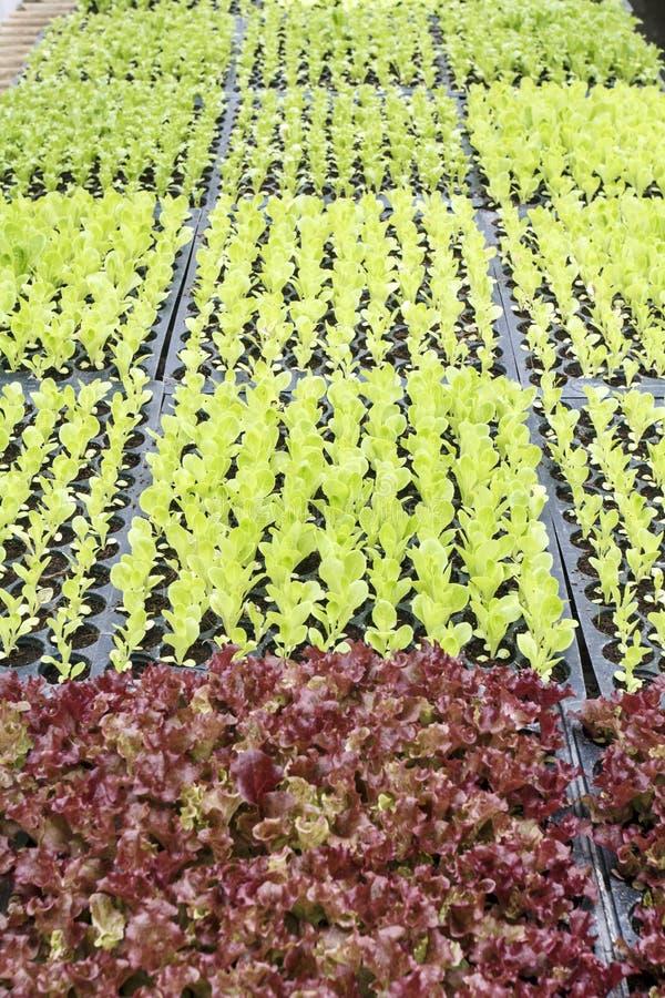 Almácigos vegetales fotos de archivo libres de regalías