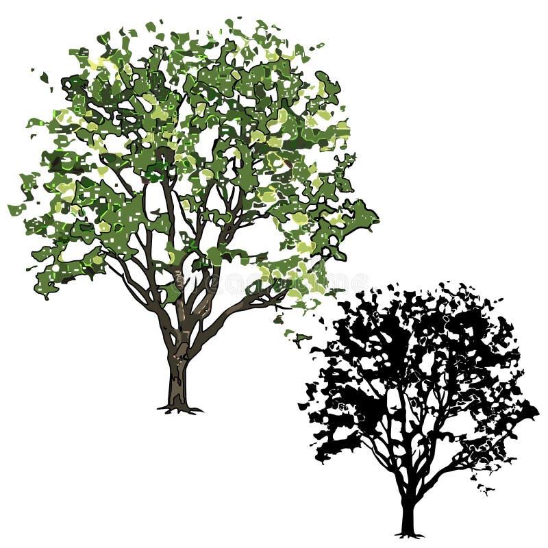Alm med sidor i sommaren, två teckningar - färg och en kontur vektor illustrationer