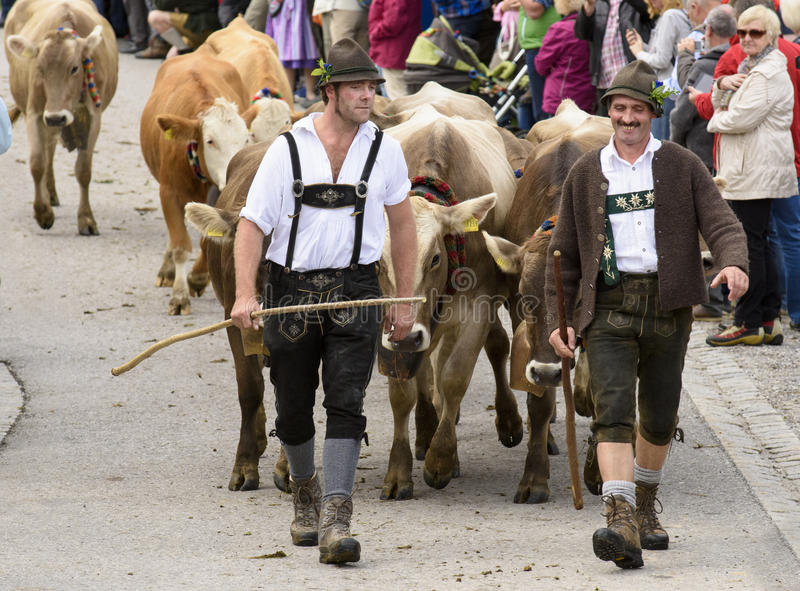 Almabtrieb and Viehscheid in Bavaria. Nesselwang, Germany - September 16, 2015: The traditionally celebrated return of an herd of decorated cattles with cowherds royalty free stock photo