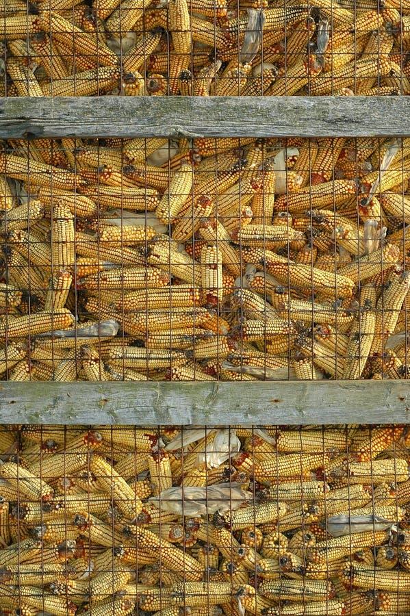 Almacenaje seco del maíz foto de archivo libre de regalías