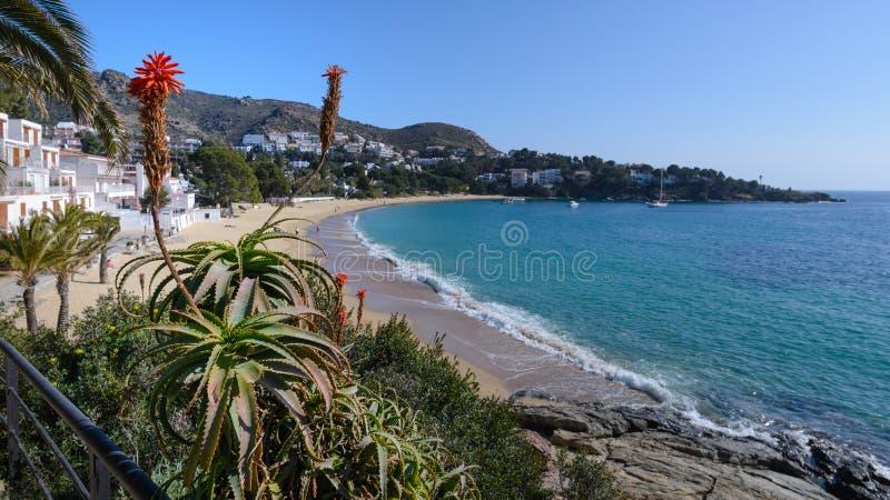 Almadrava海滩,在肋前缘布拉瓦岛,西班牙的玫瑰 免版税图库摄影