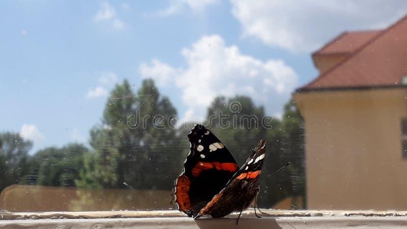 Almirante vermelho da borboleta na janela fotografia de stock royalty free