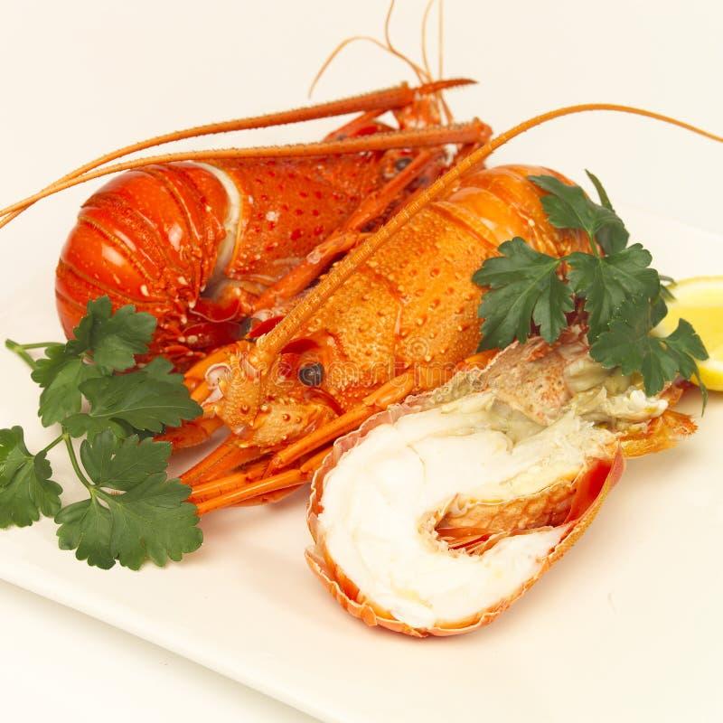 Almoço da lagosta imagens de stock